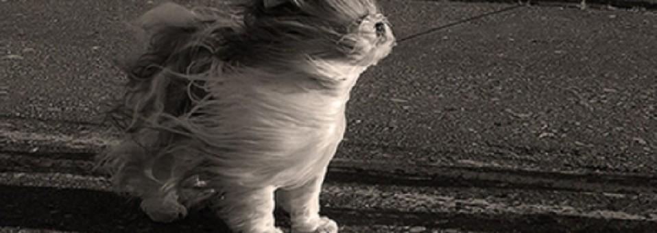 Norah Newman: Minka és a kalitkába zárt eső – 2. részlet