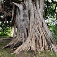 Nyírő Szabina: A görbe fánál