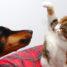 Környei Erika: Kutyaélet, kutyabaj