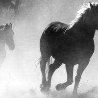 Sereg Margit: A viharok akkor a legpusztítóbbak, ha új lovas van a vad hajsza élén