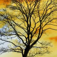 Tóth-Hóbor Csilla: A vándorló nyírfa (részlet)