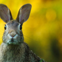 Boldog húsvétot mindenkinek