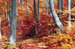 Dyta Kostova: A fák dicsérete